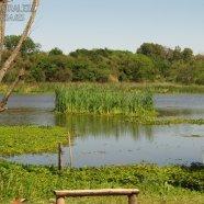 Obsérvese en un dia de viento, el movimiento de la vegetación flotante en un minuto, comparando esta imagen y la siguiente