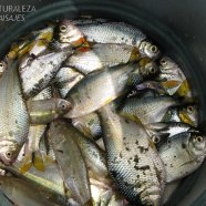 La pesca fué abundante