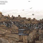 Isla de los Lobos Ushuaia (Pcia.Tierra del Fuego)