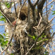 Nido / Nest