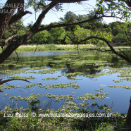 Laguna Florida - Reserva Aguiar - San Nicolás